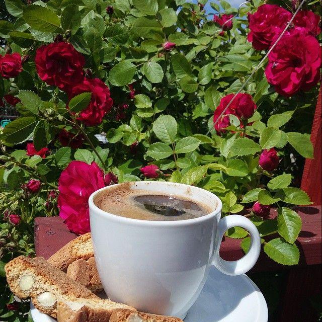 #przerwawnauce #dzieckośpi #coffeetime #cantuccini #mymoment #roses #inmygarden #gutkowo #relax ☕