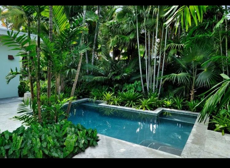 Plunge Pool In A Tropical Setting