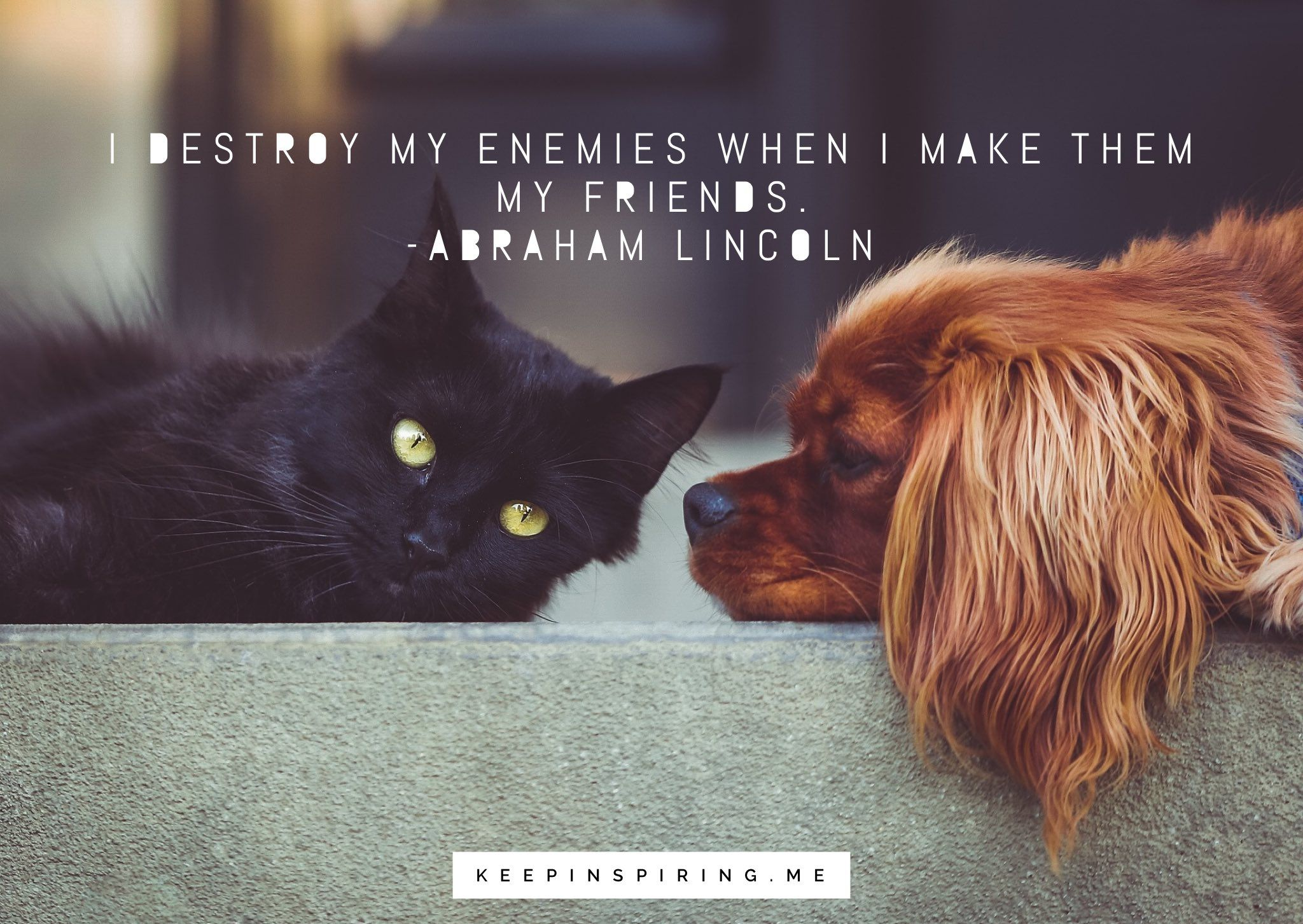 Follow Us To Get Your Daily Puppy Quote Fill Quotes Quoteoftheday Motivationalquotes Puppylove Paw How To Introduce Dogs Cat Vs Dog Cats And Kittens