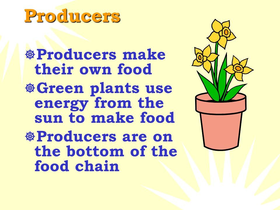 Image Result For Food Web Producers Consumers Decomposers Producers Consumers Decomposers Food Web Food To Make