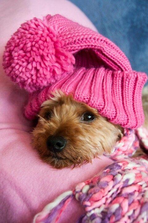 Awww... | Papier-mâché animals | Cute animals, Puppies, Dogs