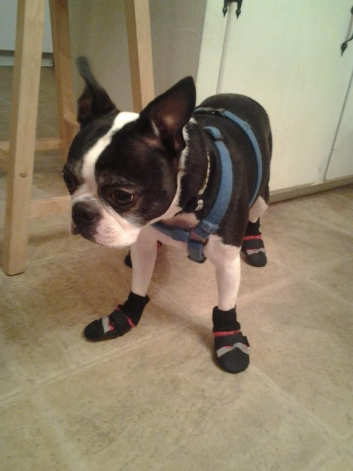 Winston is ready for winter! And none too thrilled about it...