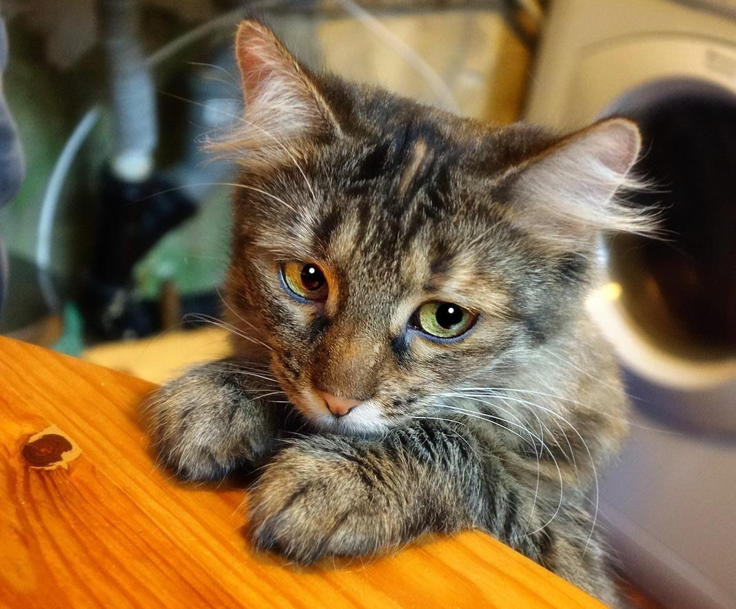 Смешные картинки котов без надписей