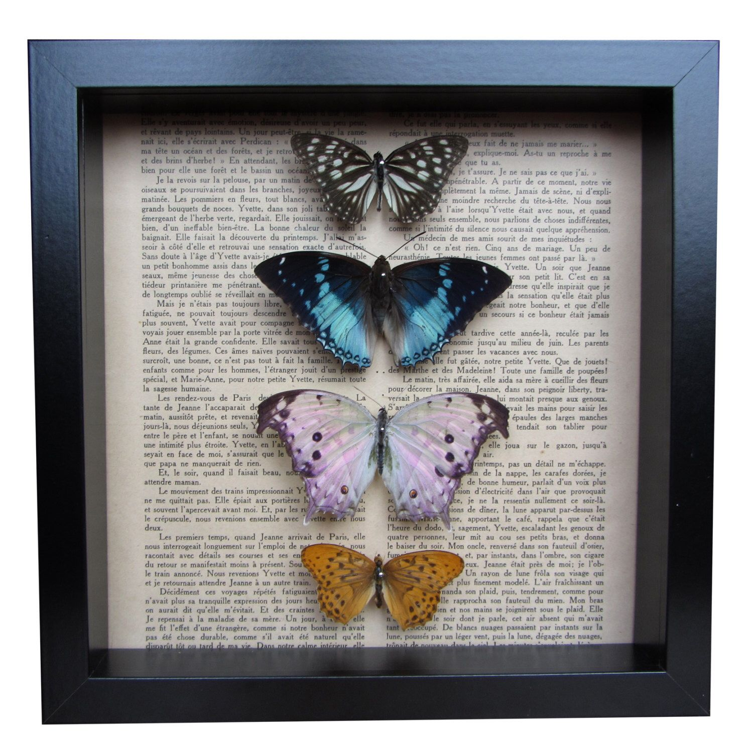 Beautiful taxidermy butterfly frame by TheCuriousMenagerie on Etsy https://www.etsy.com/listing/290962025/beautiful-taxidermy-butterfly-frame