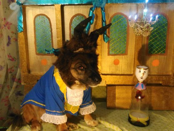 Beast From Beauty And The Beast Dog Halloween Costume Beauty And