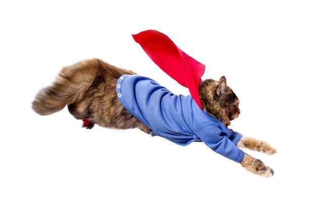 Superhero Cat Halloween Costume