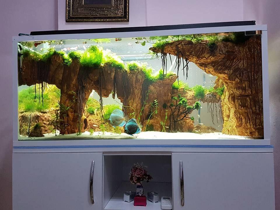 можно картинки декорации в аквариум острова мадагаскар, где