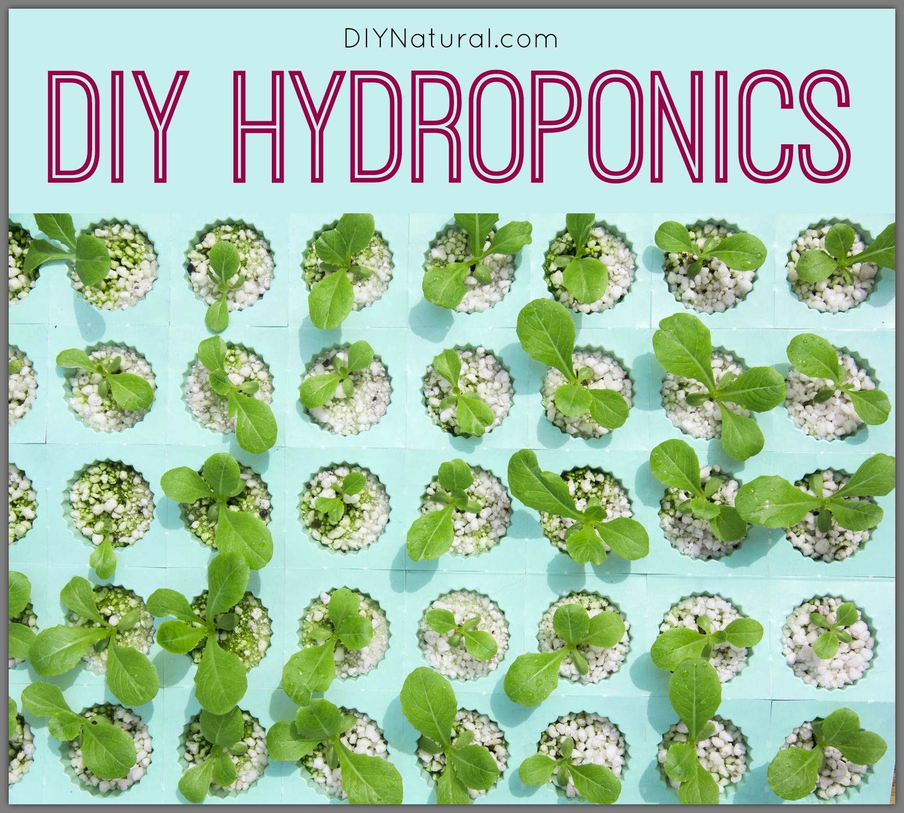 DIY hydroponics allow for simple, inexpensive gardening systems that work even when temperatures are freezing. Don't let the cold stop you from growing food!