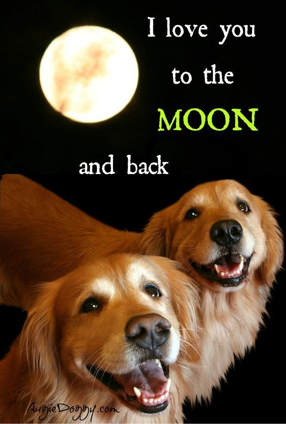 Dogs Golden Retriever Dog Quotes Golden Retriever
