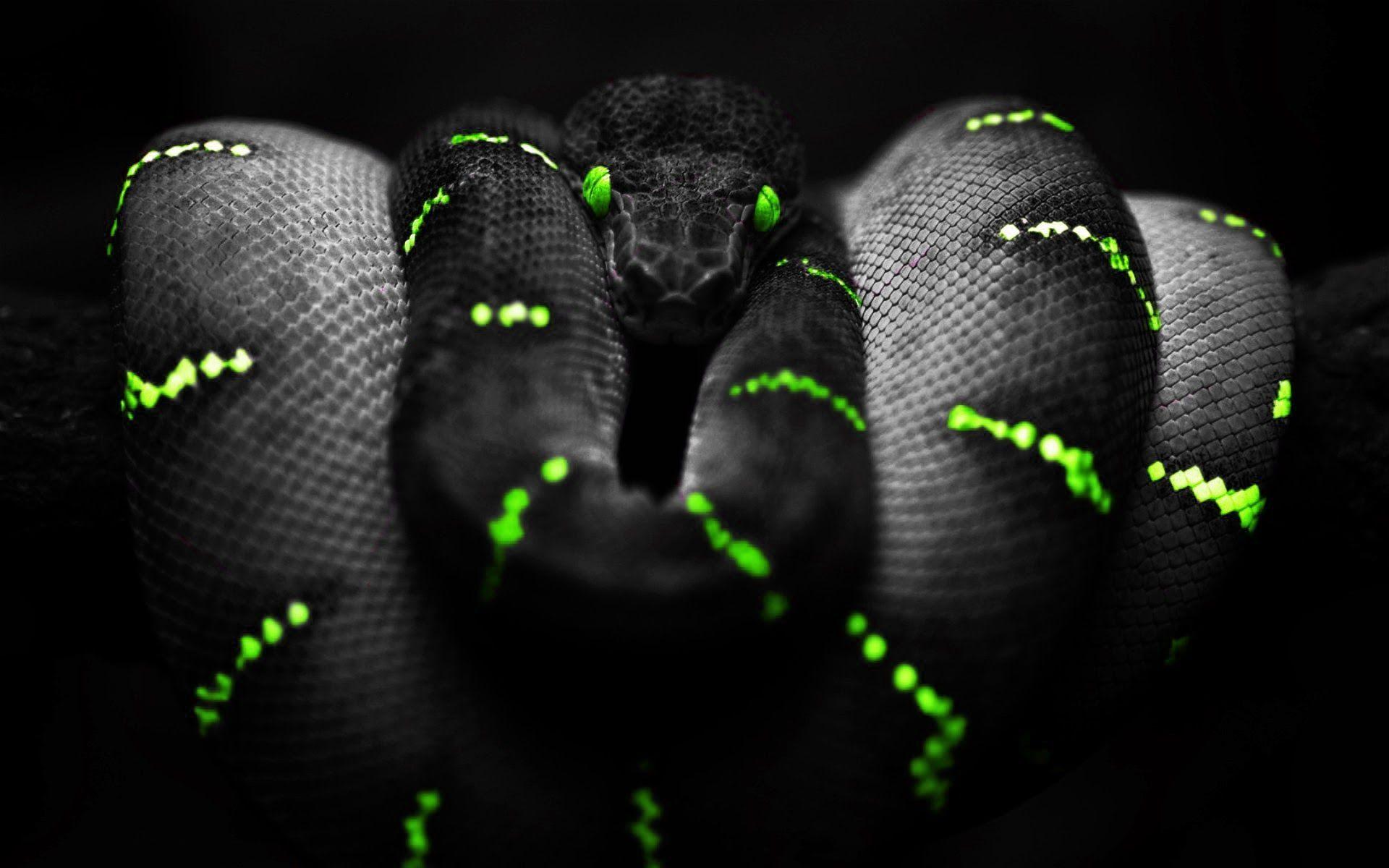 Pin By Tammy Underwood On Emam Snake Wallpaper Black Hd Wallpaper Snake