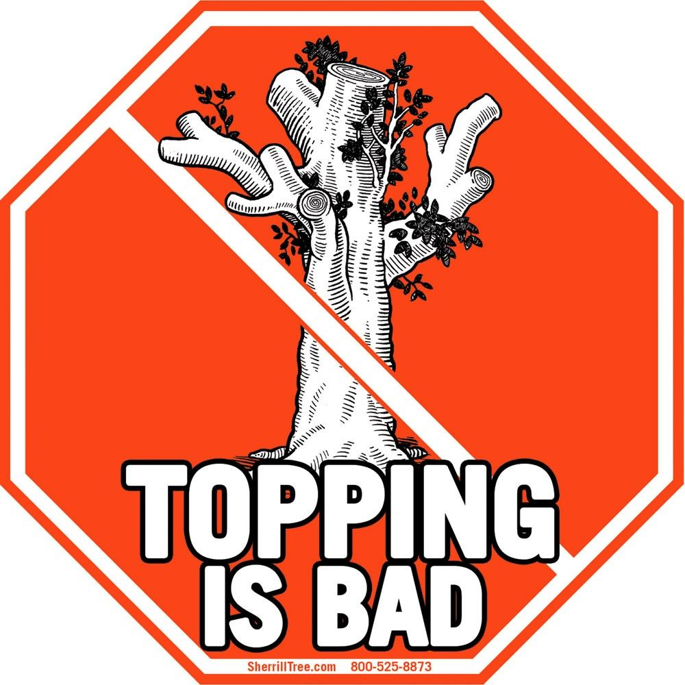 Topping Is Bad Sticker Photo In 2020 Arborist Tree Care Photo