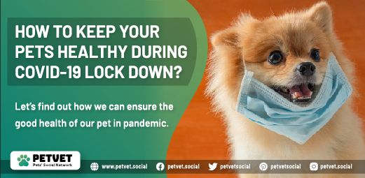 How To Keep Your Pet Healthy During Lockdown In 2020 Family Pet