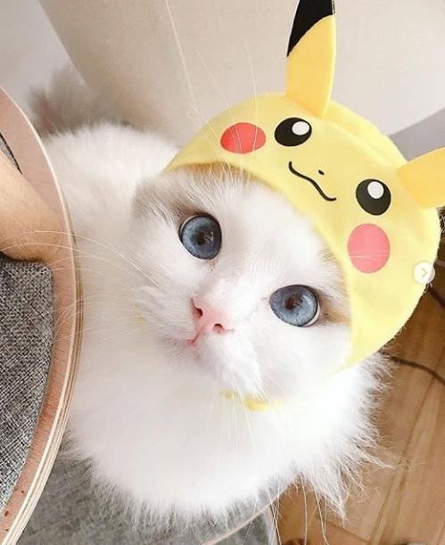 Pinterest xioohh Pretty cats, Cute cats, Cute cat