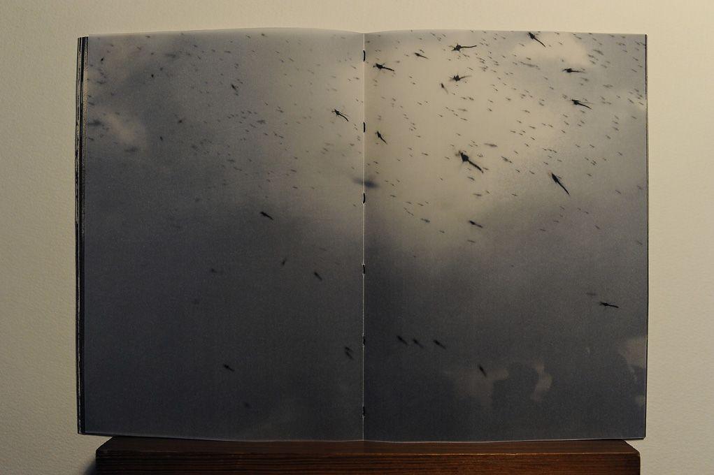 Fé Cega | Livraria Madalena