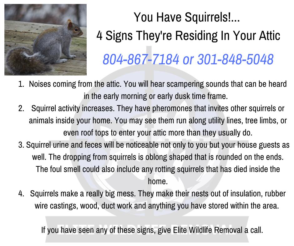 Raccoons Squirrels Mice Rodents Bats Groundhogs Moles Voles Foxes Beavers Birds Snakes Rats Skunks Opossum Nuisan In 2020 Squirrel Dusk Time Pheromones