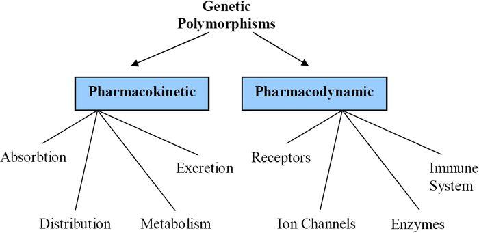 Pharmacogenomics And Personalized Medicinemedcastle Com Personalized Medicine Pharmacology Nursing Medical Humor
