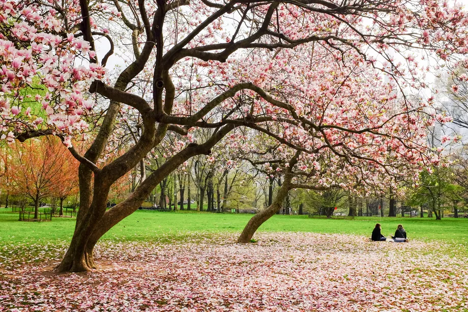 The Best Zoom Backgrounds For New York City Fanatics Background Free Nyc Nyc Park
