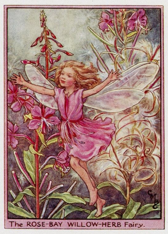 This Beautifull Rose Bay Willow Herb Flower Fairy By Cicely Mary Barker Was Printed C 1950 Flower Fairies Books Beautiful Fairies Cicely Mary Barker