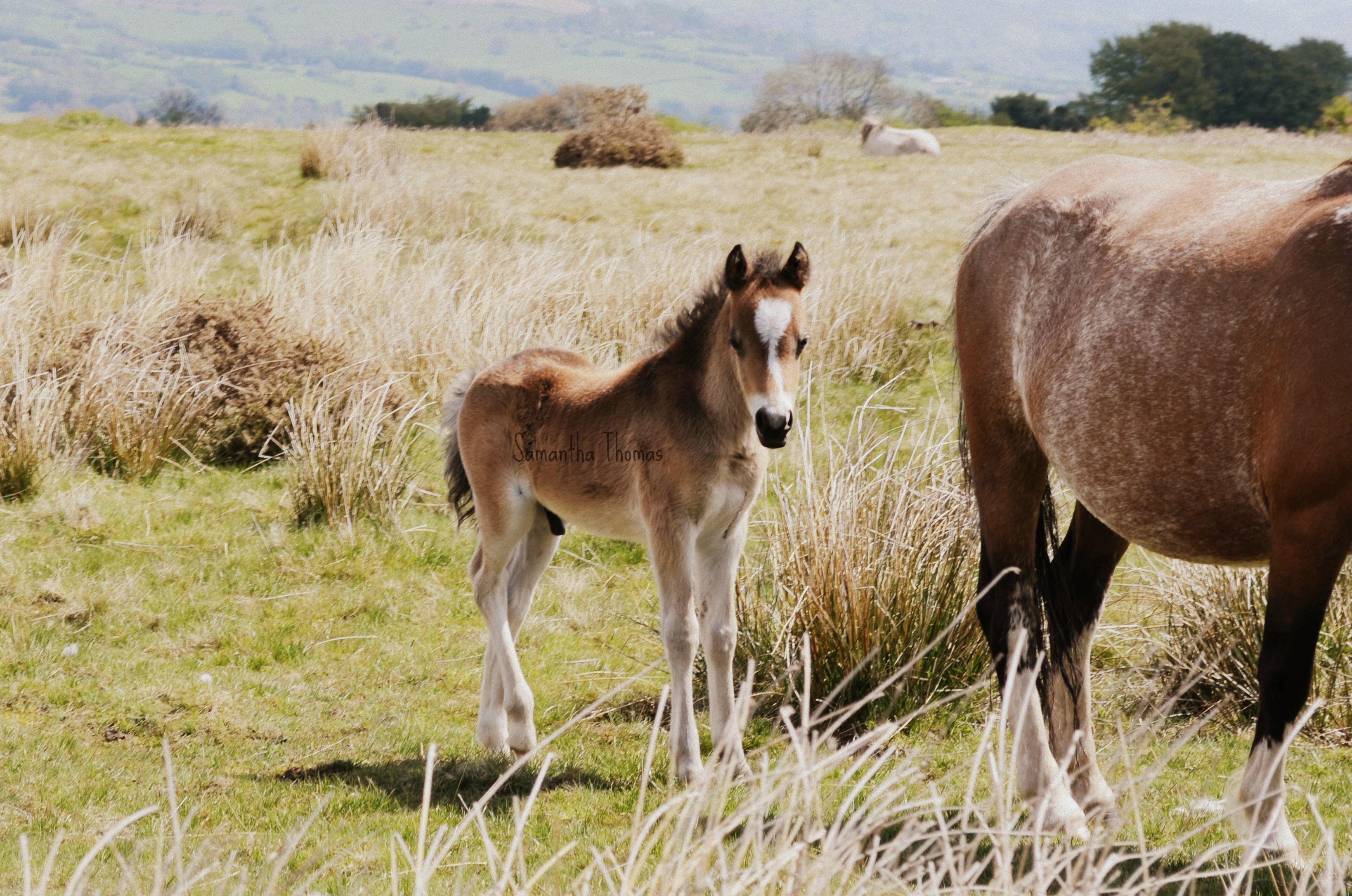 Wild horses Wild horses, Horses, Animals