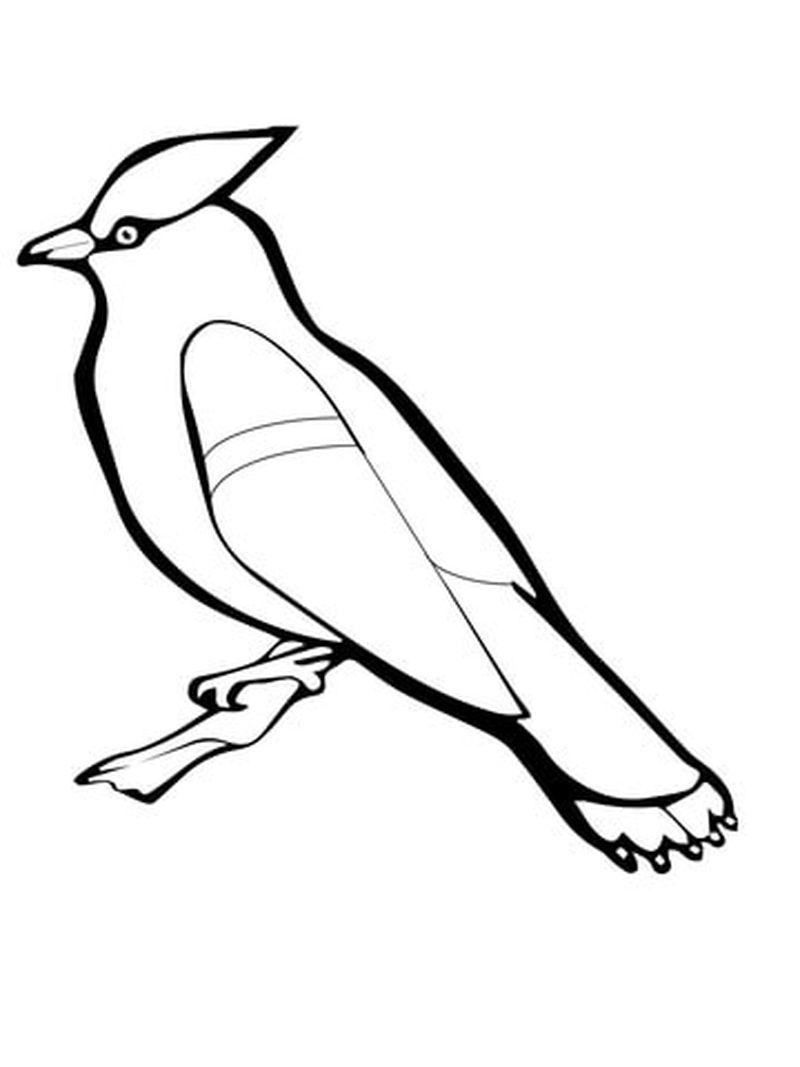 ausmalbilder vögel im winter | malvorlage eule