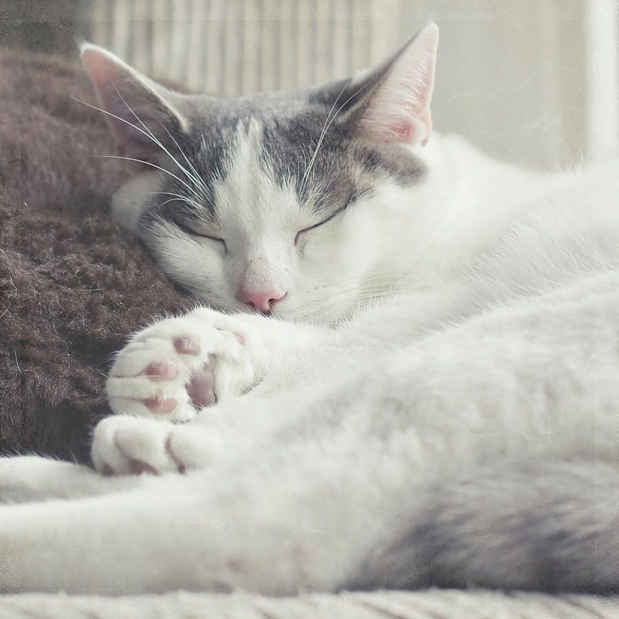 White And Grey Cat Grey And White Cats Pinterest