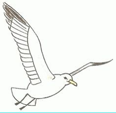 How To Draw A Seagull Bird Drawings Sailboat Art Seagull Illustration