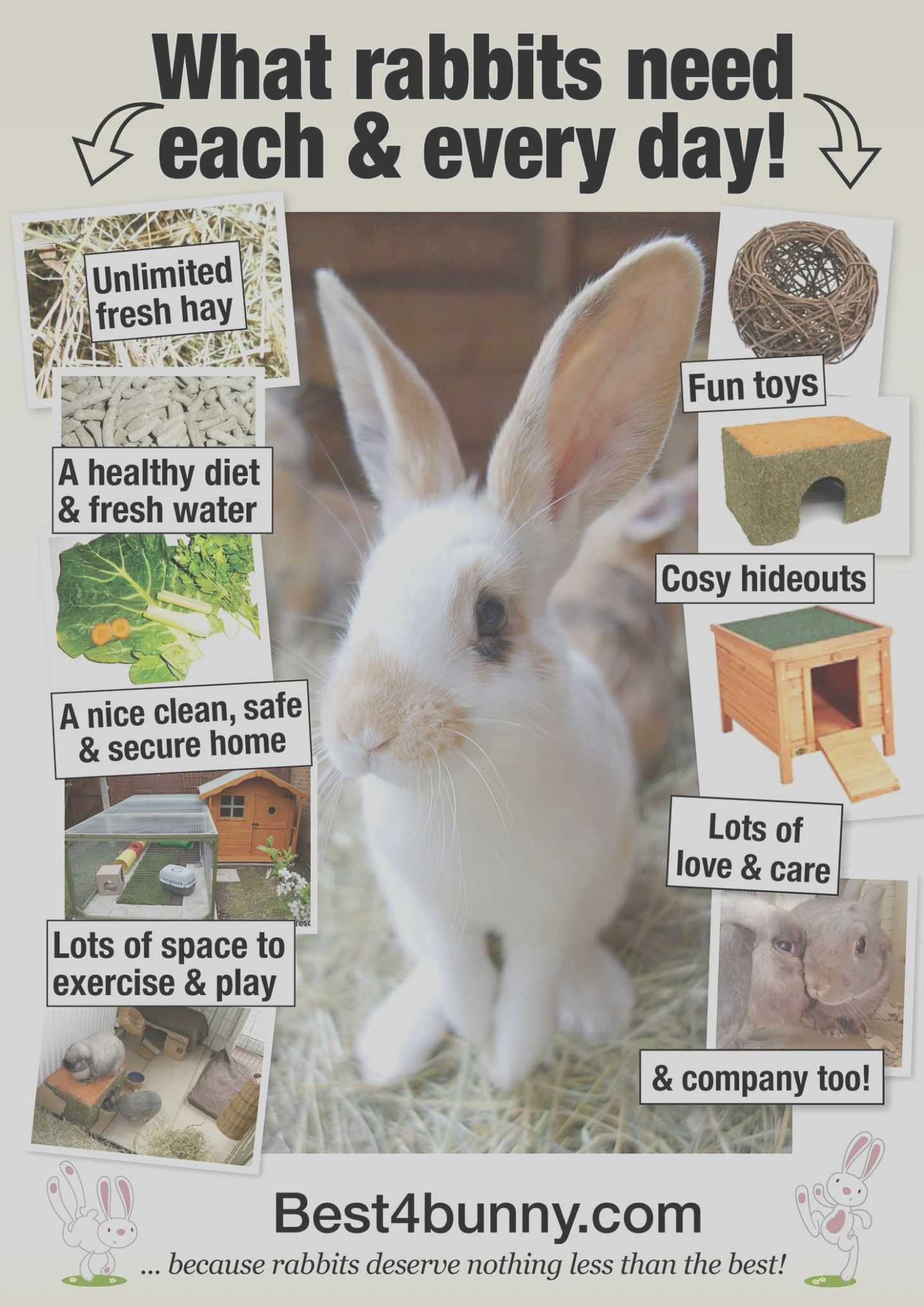 How You Can Attend Care Of A Pet Bunny With Minimal Budget Care