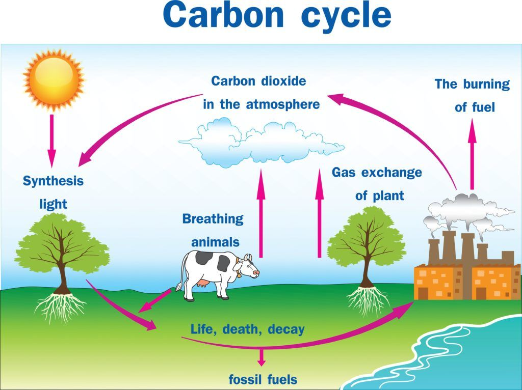 Gardening Basics Carbon Cycle And Carbon Sequestration Kidsgardening Carbon Cycle Carbon Sequestration Nitrogen Cycle