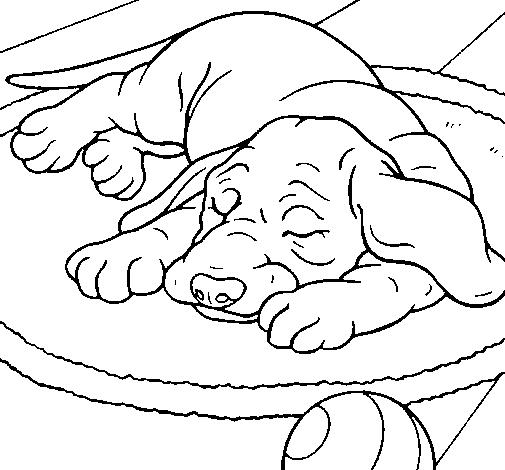 Risultati Immagini Per Cane Che Dorme Disegno Cani Che