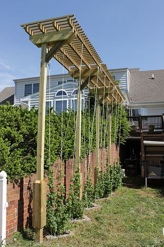 Grow With Confidence From Choosing A Hop Variety To 640 x 480