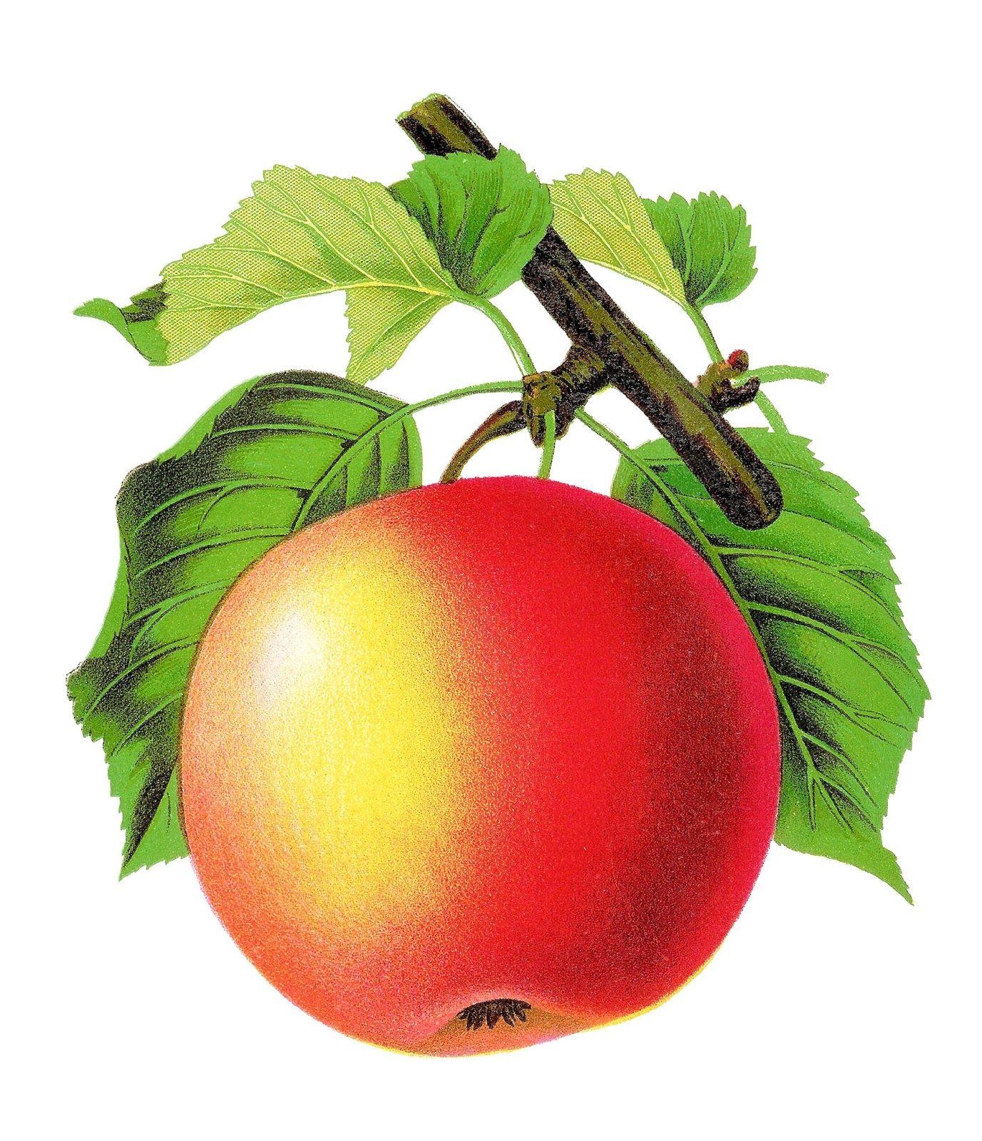 Apple Fruit Image Apple Longfield Jpg Jpg Jpeg Kuva 1377 1600 Kuvapistetta Pienennetty 41 Alkuperaisesta Pinterest