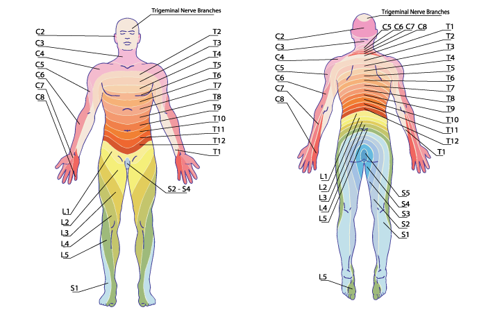 Locating And Alleviating Pain With The Dermatome Chart E Stim