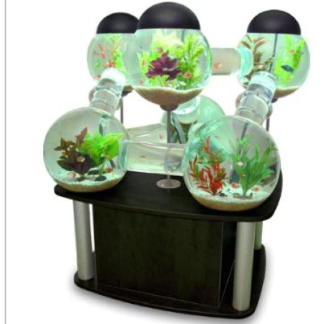 how to cool fish tank water