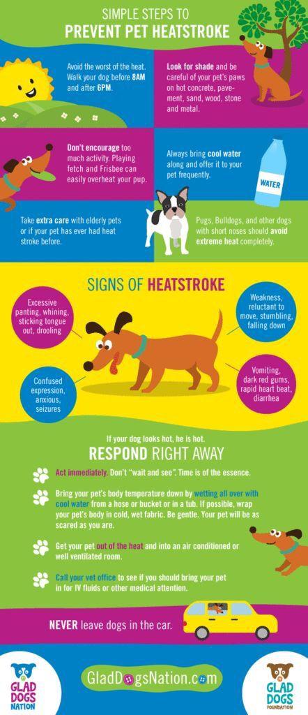 Simple Steps To Prevent Pet Heat Stroke Pet Safety Heat Stroke In Dogs Pet Hacks