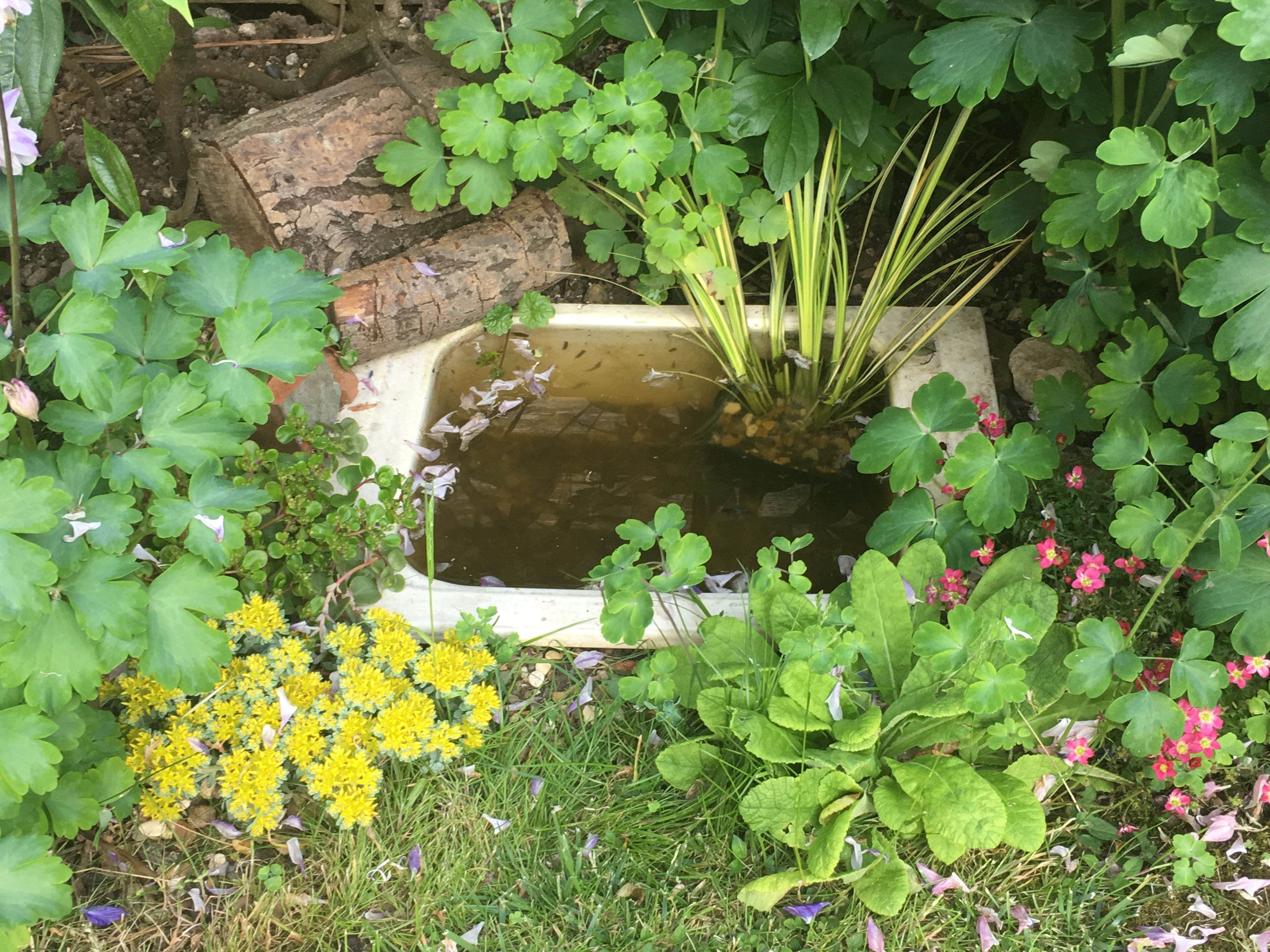 A little watering hole haven for wild life created from a