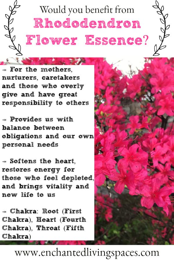 Rhododendron Work Life Balance Boundaries Restoration Of Energy Flower Essence Flower Essences Flower Essences Remedies Flower Remedy
