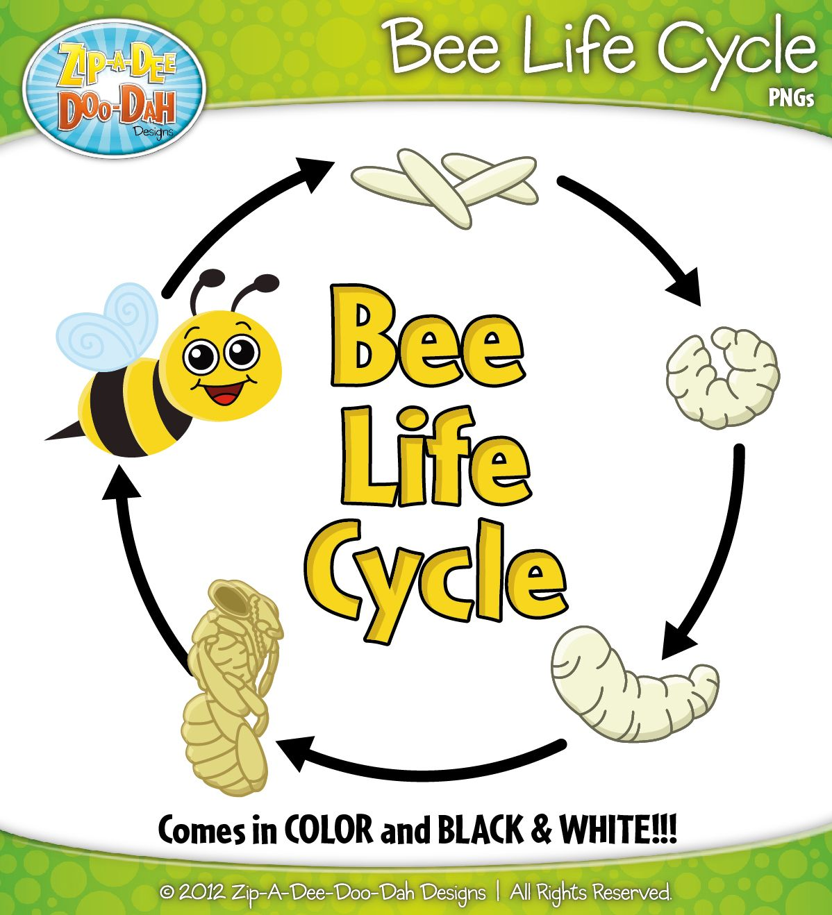 Bee Life Cycle Clipart Zip A Dee Doo Dah Designs
