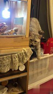 funny cat  animal
