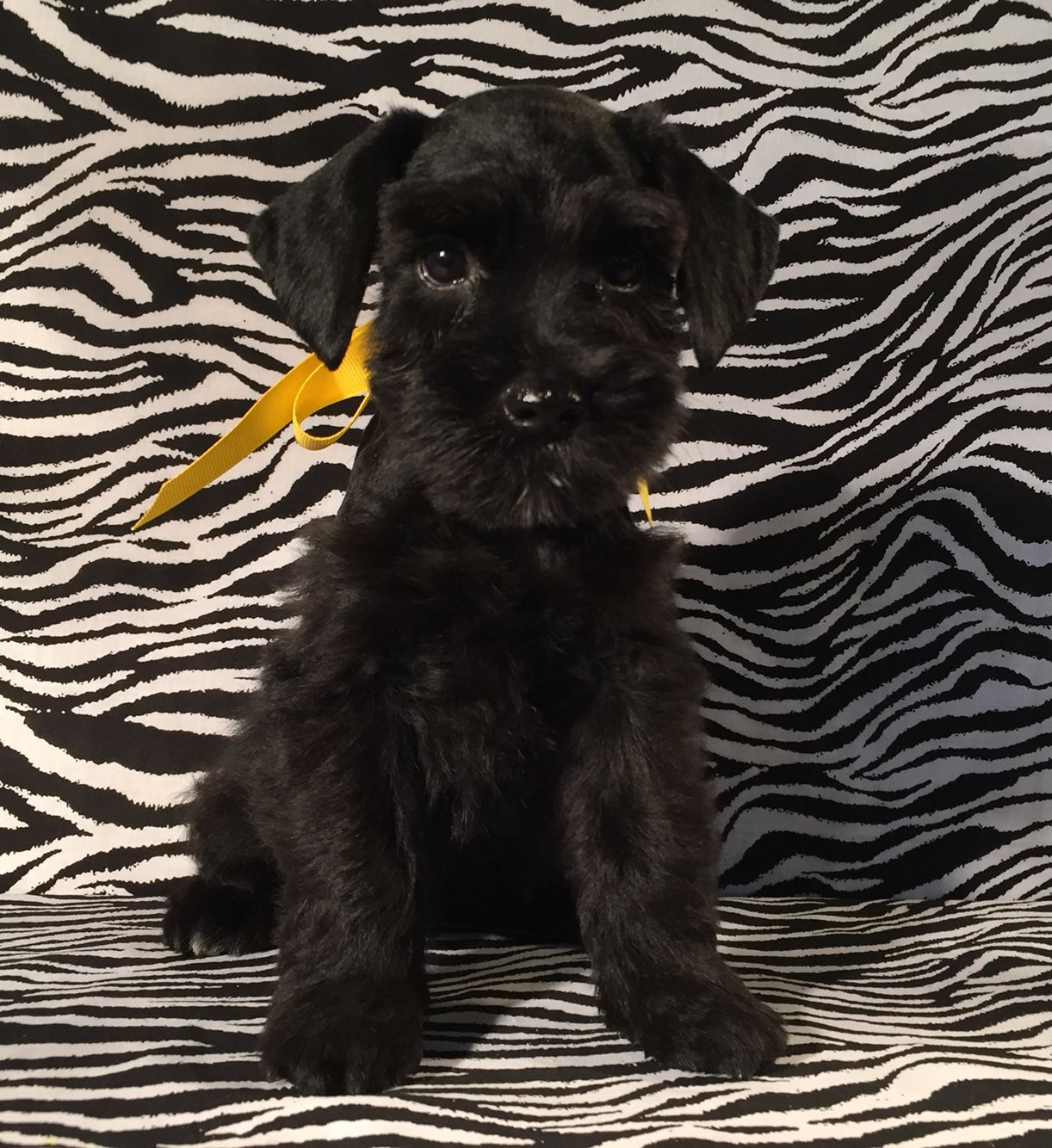 Quintin (8 weeks old) :-)