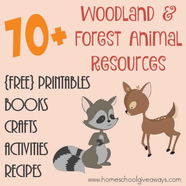 70 FREE Woodland amp Forest Animals