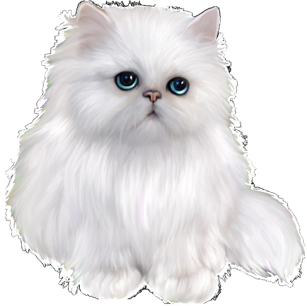 White Persian Cat Clipart | Persian cat white, Cat clipart ...