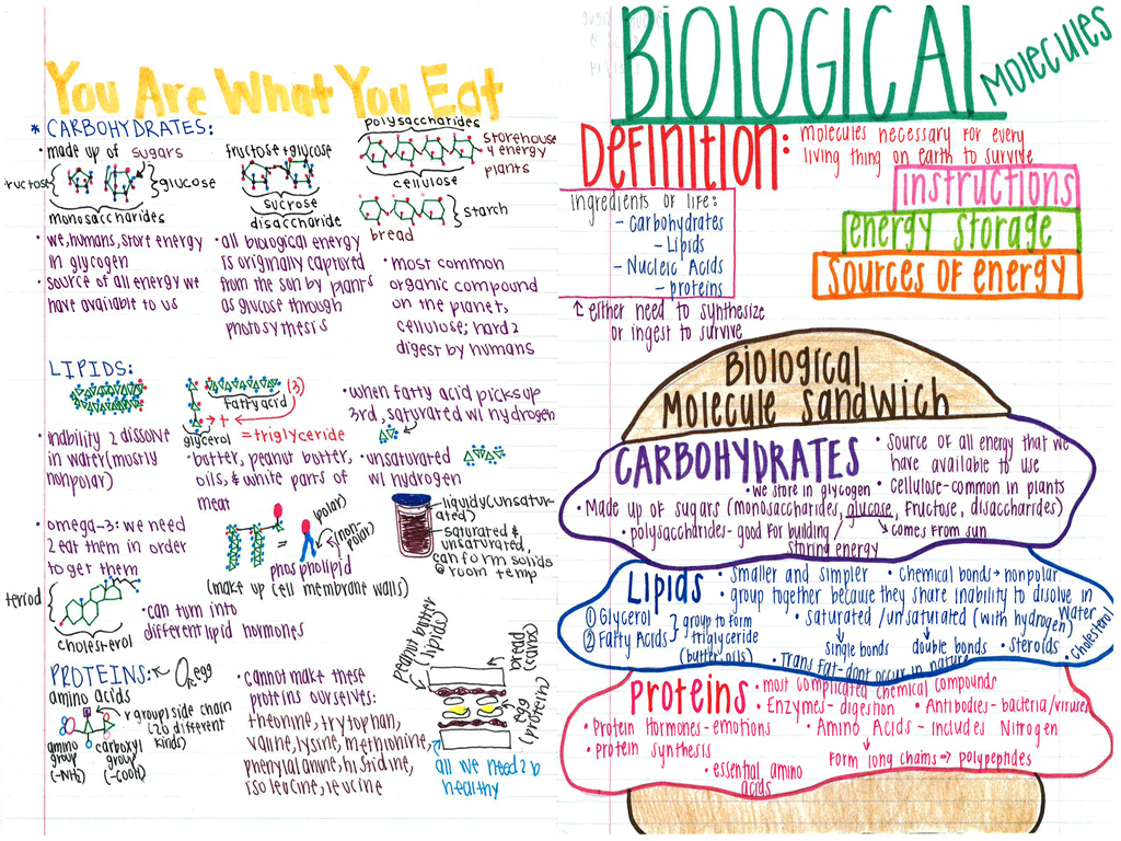 Biology Knights Your Interactive Notes