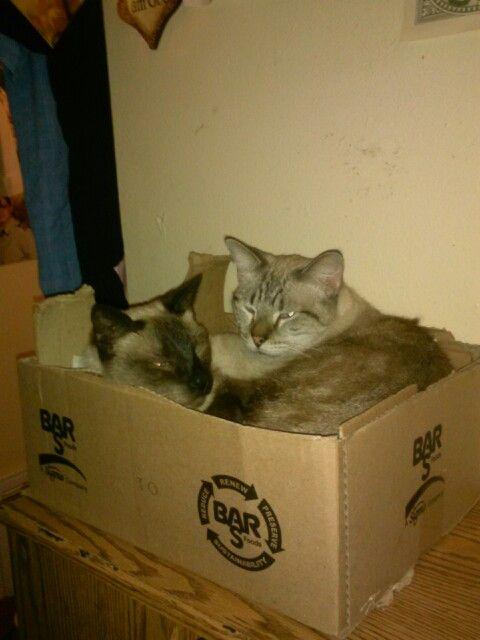 Cuddling kitties!