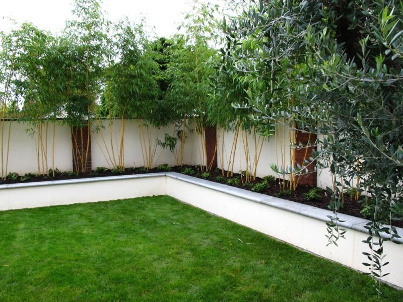 Rendered Wall raised bed bamboo screening plants Stonewall