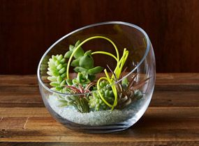 How To Make A Tabletop Terrarium