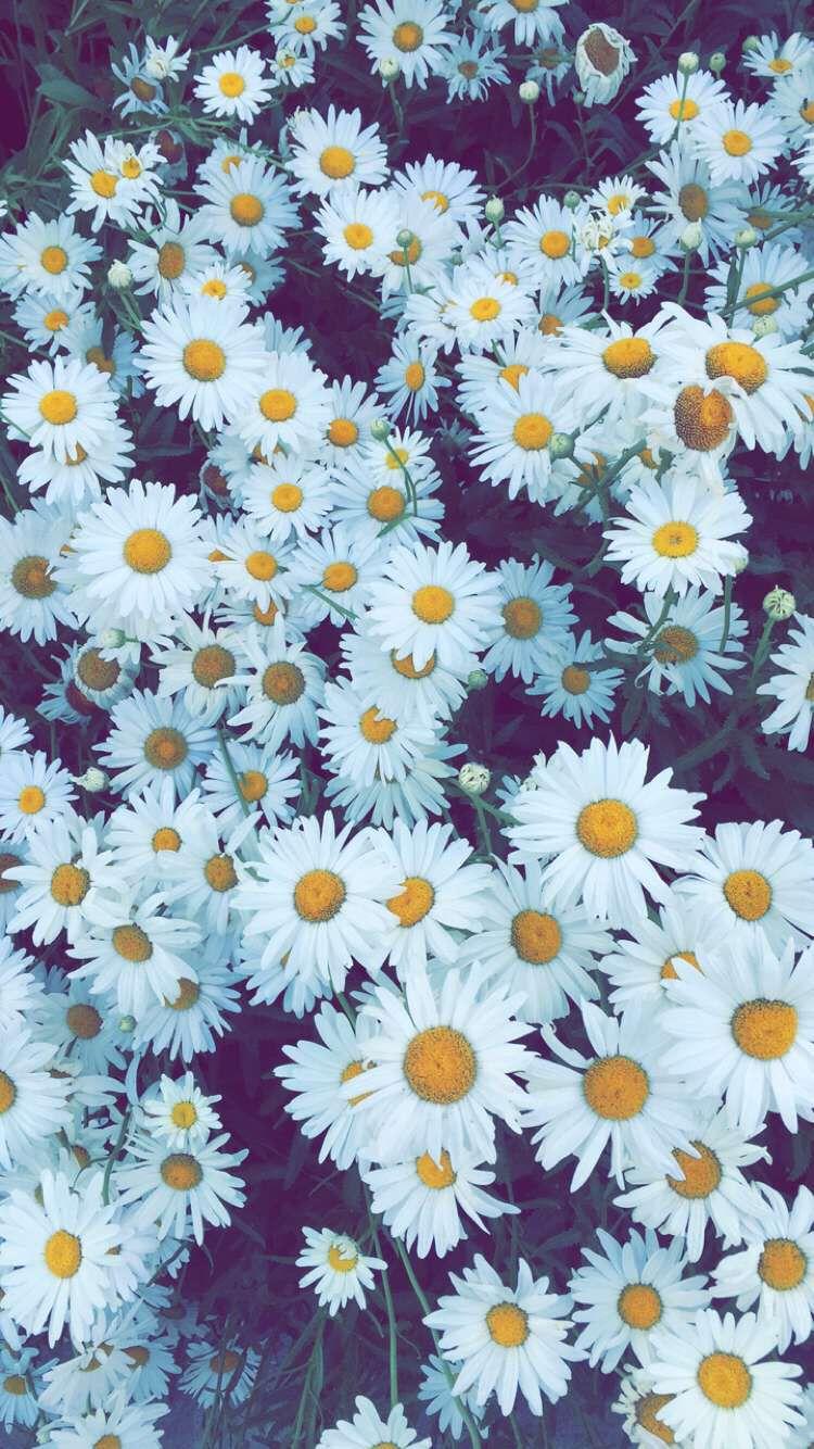 Flower Iphone Wallpaper Infipizza Fondos De Flores Fondos Y