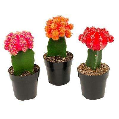 Schultz 138 G Cactus Food The Home Depot Canada
