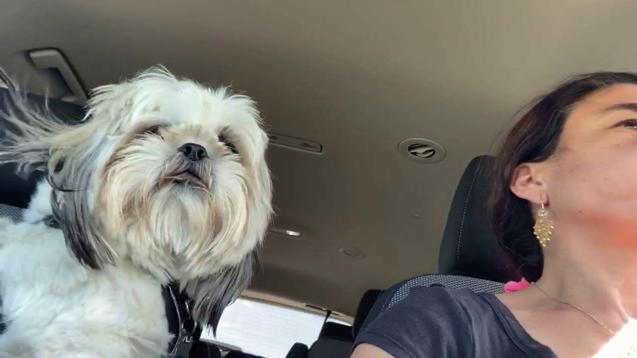 A Day In Little Baghdad كلب لطيف Cute Dog