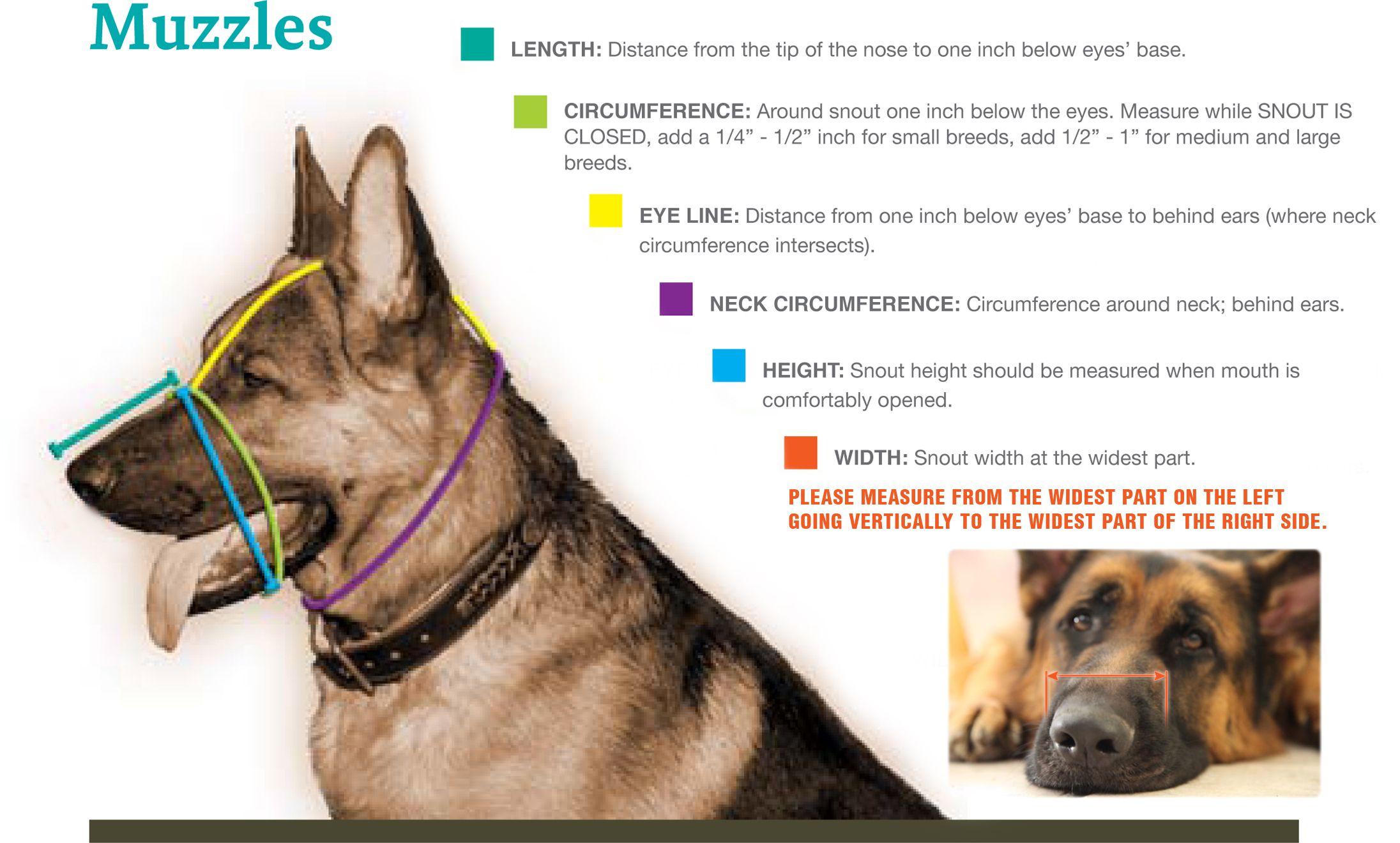 Compare Dog Breeds: New Guinea Singing Dog vs Foxy Rat Terrier vs ...