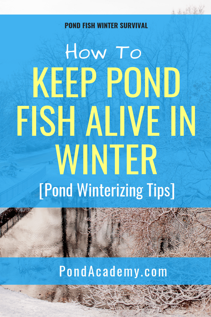 Learn How To Keep Pond Fish Alive In Winter Without Worry We Show You Our Best Tips And Tricks To Help Your Fish Outdoor Ponds Fish Pond Gardens Goldfish Pond